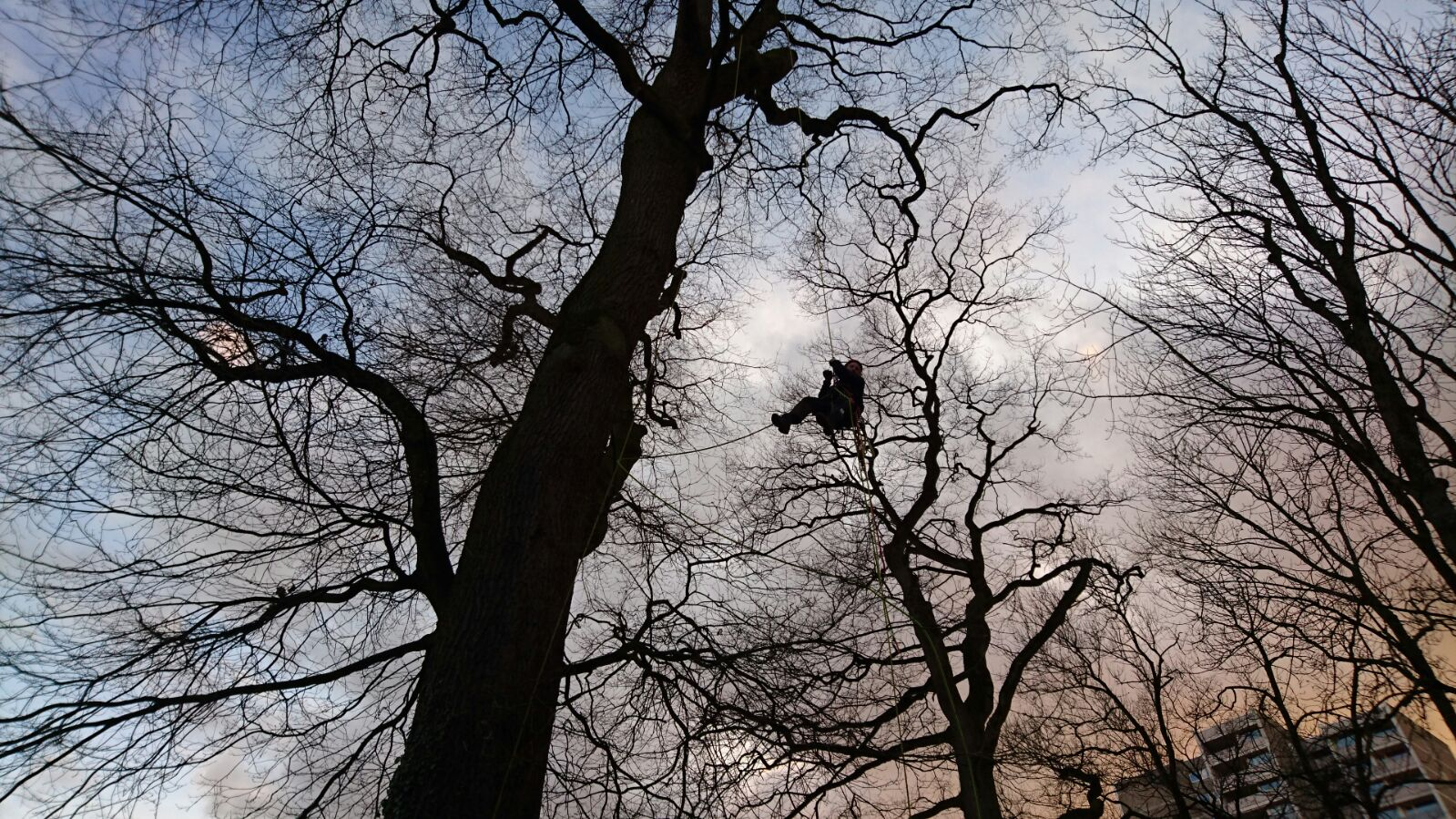 Klettergurt Für Baumpflege : Herzlich willkommen u baumpflege jannik loest